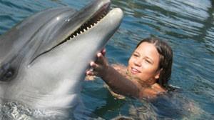 детские стихи про дельфинов