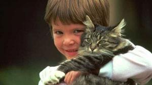 стихи про Марка и кота