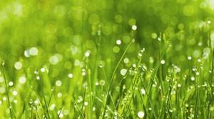 стихи про росу и траву