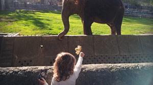 стихи про Олесю и слона