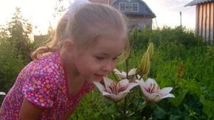 стихи про цветок и Лилю